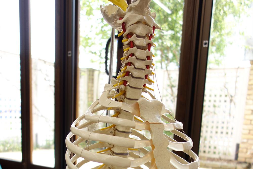 常に新しい整体療法を研究し、患者様に最適な施術を提供します